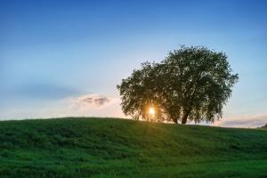 Setting Sun behind Tree
