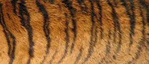 animal-textures-1180985